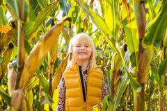 Little smiling blond kid staying in a corn field on farm Stock Images