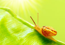 Little snail. On the leaf, beauty of nature Stock Photos