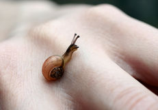 Little snail Royalty Free Stock Images