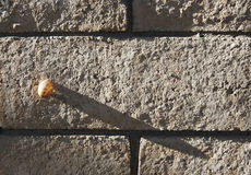 Little Snail Casts a Big Shadow Stock Image