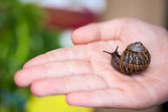 Little snail Royalty Free Stock Photos