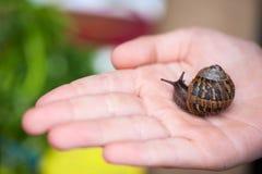 Little snail Royalty Free Stock Photos