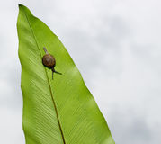 Little snail on green leaf Stock Images