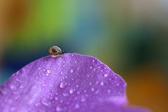 Little snail on a pink petal on a rainbow background.  royalty free stock photos