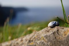 Little snail shell. Detail of white snail shell on a stone Royalty Free Stock Images