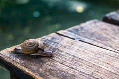 Little snail on wooden table. With bokeh ground Stock Images