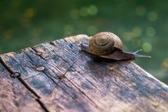 Little snail on wooden table Stock Photos