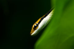 Little snake in green nature Royalty Free Stock Image