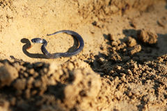 The little snake on the ground. Royalty Free Stock Image