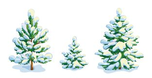 Little snow-covered pine tree and two fir trees. Vector dwawing Royalty Free Stock Photo