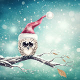 Little snow owl Stock Images