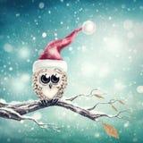 Little snow owl stock illustration