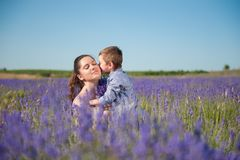 Little son kissing his mother among flowering lavender field. Little son kissing his mother among lavender field royalty free stock images