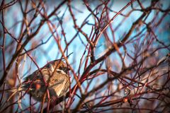 A little songbird sits among the branches of a bush against a blue sky