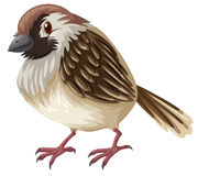 Little sparrow with brown feather. Illustration Stock Image