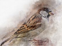 Little sparrow Watercolor Digital Painting vintage Royalty Free Stock Photo
