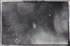 A little spider Stock Images
