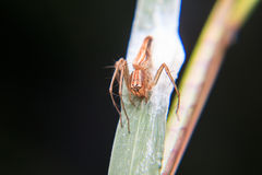 Little spider Royalty Free Stock Images