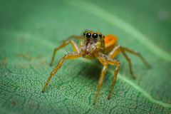 little spider like jelly royalty free stock photos