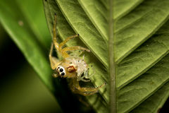 Little spider. Royalty Free Stock Photo