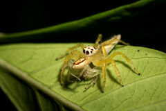 Little spider. Stock Photo