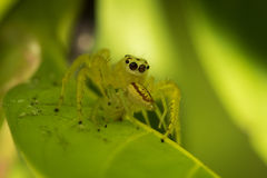 Little spider. Royalty Free Stock Images