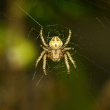 The little spider Stock Photos
