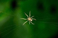 The little spider Royalty Free Stock Images