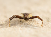 Little Spider Stock Photography
