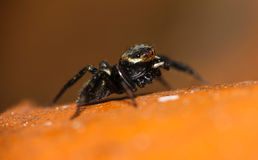 Little spider in my Roof top Royalty Free Stock Photography