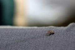 Little spider searching around. Macro shot of little spider searching around royalty free stock image