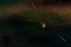 A little spider sits on the web. close-up stock photos