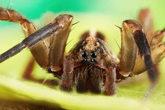 Little spider sitting on a green leaf. Small spider shot large in its habitat stock photo