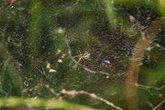 Little spider on the spider web Stock Photos