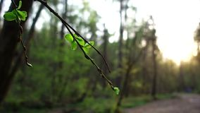 Little spider on a spring branch. stock footage