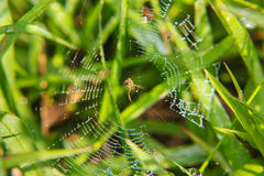 Little spider Royalty Free Stock Photos