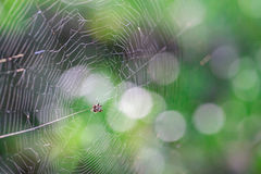 Little Spider on the web Royalty Free Stock Photo