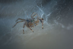 The little spider Royalty Free Stock Photos