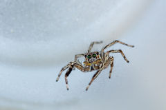 The little spider Stock Images
