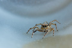 The little spider Stock Image