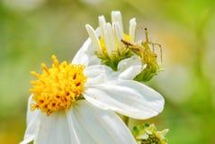 Little Spider. On white flower stock image