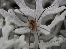 Little spider on a white leaf royalty free stock photo