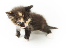 Little spotted funny kitten Royalty Free Stock Photography