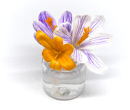 Little spring flowers macro Royalty Free Stock Photography