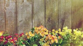 Little spring flowers in the sunlight garden Stock Image