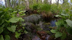 Little spring flow stock video