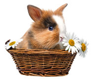 Little spring rabbit Stock Image