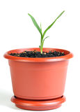 Little sprout in the flowerpot Stock Images