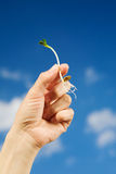 Little sprout in hand Stock Photography