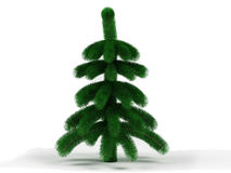 Little spruce Stock Photography